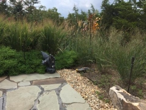 Planting native grasses around a pool boarder offer a great native look.  With their mounding, clumping effect, they also eliminate the need for mulch over time, and the recurring costs associated with it.