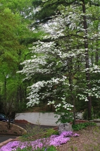 At Wilsons Natural Landscaping, we believe we have an obligation to protect the environment and reduce waste.  This native Dogwood serves as a great focal point in this woodland garden.