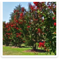 Landscaping Services - Stanfield NC  | Wilson's Natural Landscaping - plant-management
