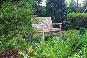 This woodland garden area with a bench offers a quiet place to retreat amongst nature, read a book, or sit and watch the wildlife.