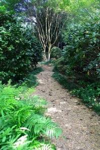 Once cleaned up, and underbrushed properly, this woodland garden area offers a nice walking path and a quiet place to retreat amongst nature.