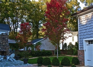 Two bookend large Maples make an immediate impact in this courtyard.