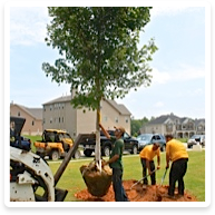 Landscaping Services - Stanfield NC  | Wilson's Natural Landscaping - large-trees